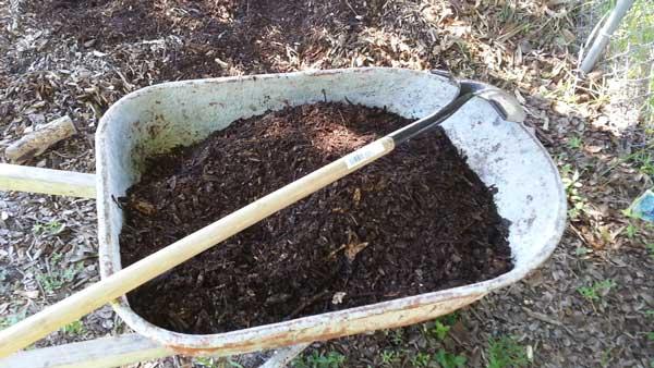 Wheelbarrow full of compost.