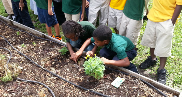 Student gardeners inspecting the soil and planting seeds.